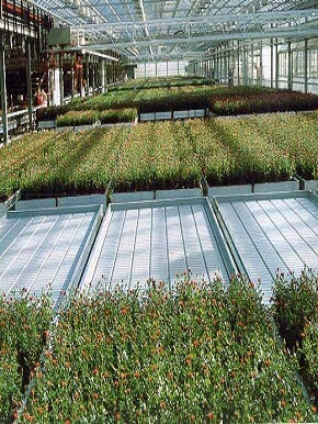 greenhouse-irrigation-systems