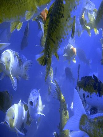 catfish-management-techniques