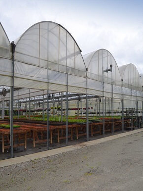 How-to-select-and-build-greenhouses