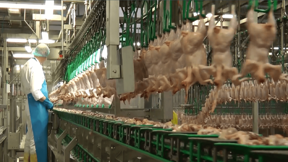 Poultry Processing Solution 3